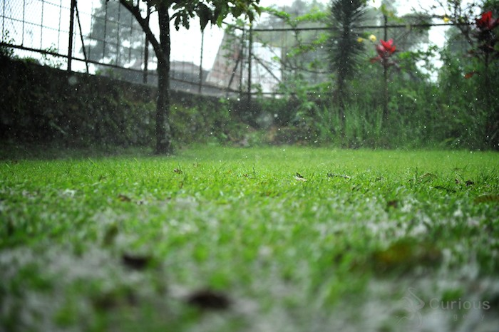 wet grass in the yard at Puncak