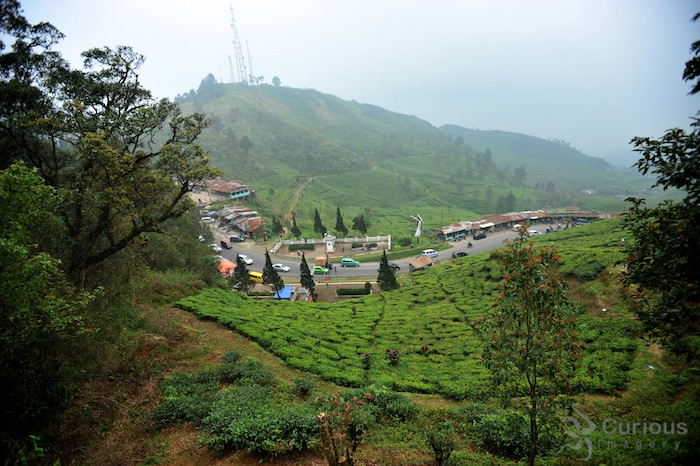 tea fields and highway in Puncak Pass Indonesia